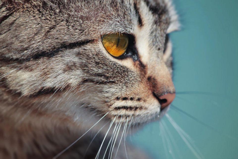 Mini urn kat: om uw favoriete huisgenootje te herdenken